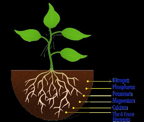 Fertilizers Explained Macronutrients Micronutrients And Slow Release Fertilizers Plantinfo